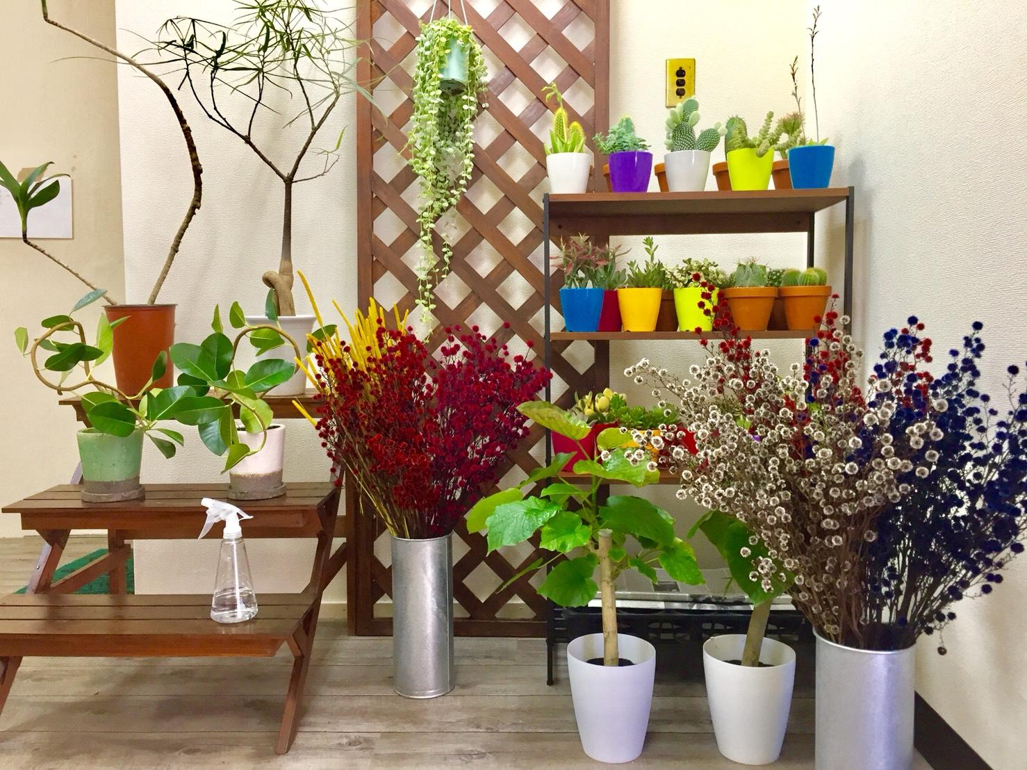 生活を彩る植物たちがGreenに