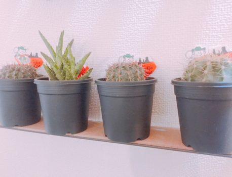 観葉植物の冬越しのコツ~植物と共に寒さを乗り越えよう~