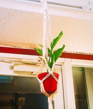 観葉植物を空間に飾る☆プラントハンガーにおススメする植物と手入れのポイント